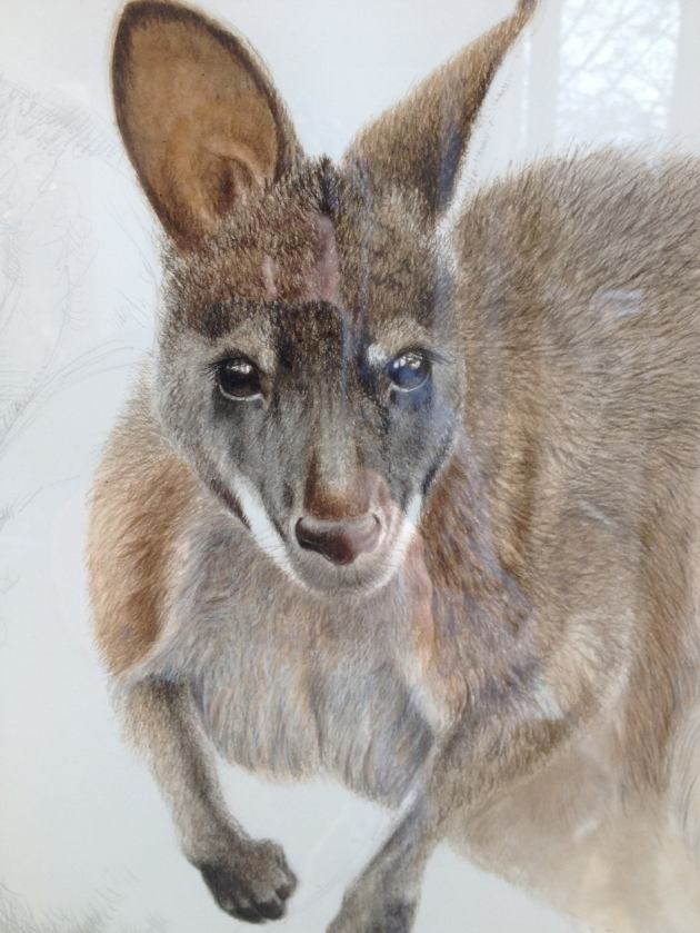 wallaby playfair