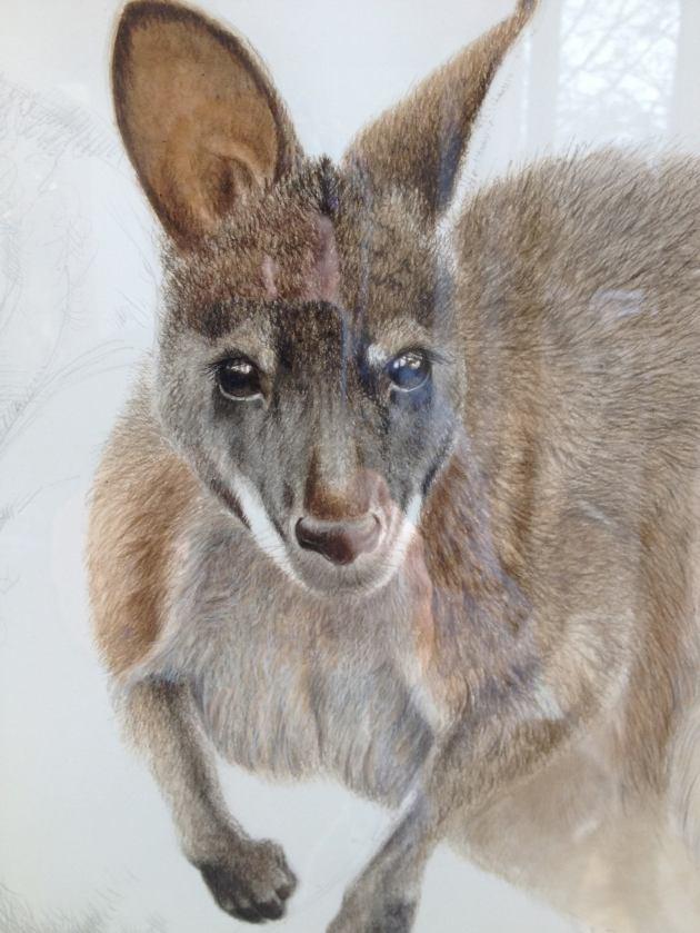 wallaby playfair