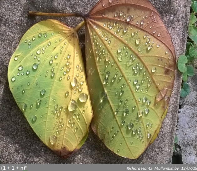 leaves&drops meme2.jpg