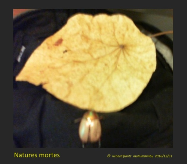 natures-mortes-meme